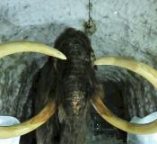 Мамонт в ледяной пещере